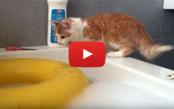 Cat In The Bathtub