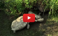 Turtles Got Your Back