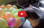 Kittens and Water Balloons