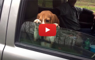 puppy not letting go of window