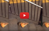 rat eating pizza