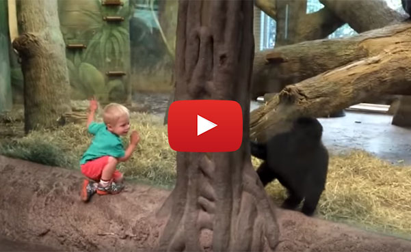 gorilla and toddler