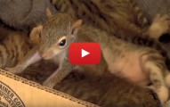 squirrel purrs like a kitten
