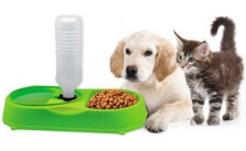 Dailygrabs Pet feeder