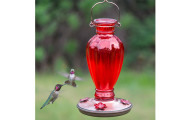 Amazon Humming bird Feeder