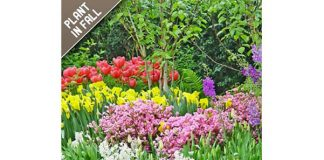 45 Days of Spring Bloom Flower Bulbs